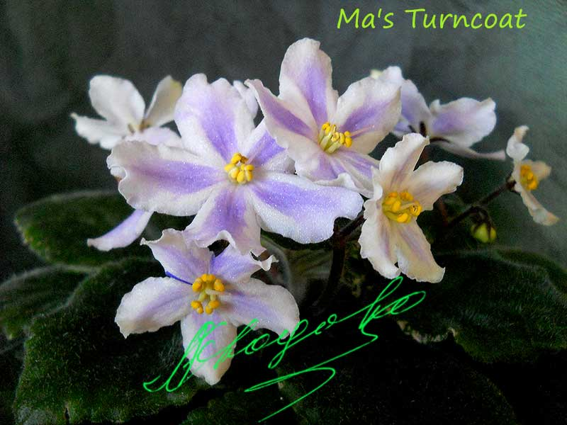 Ma's Turncoat