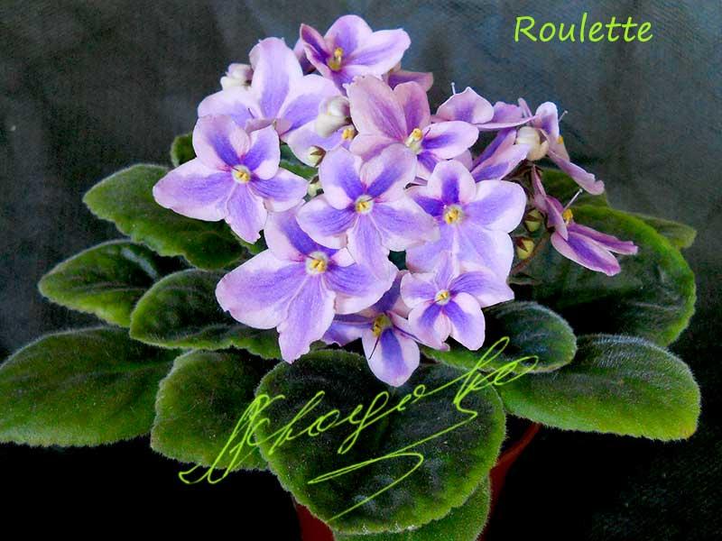 Roulette (L.Egenites)