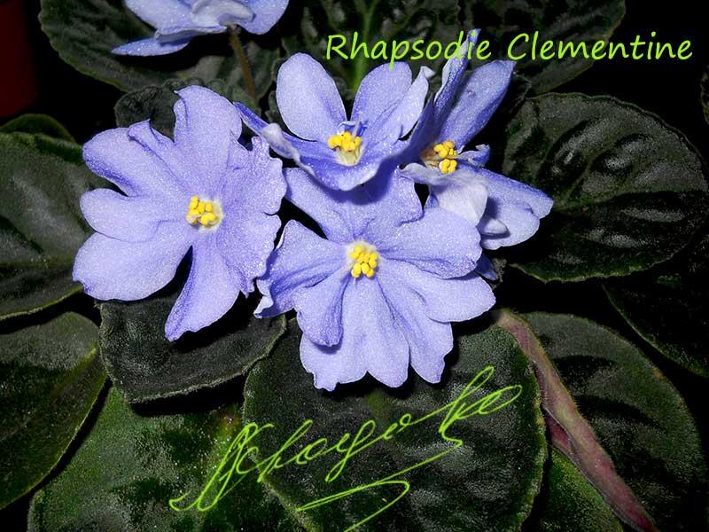 Rhapsodie Clementine (R.Holtkamp)